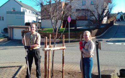 Neuer Baum vorm Pfadfinderhaus