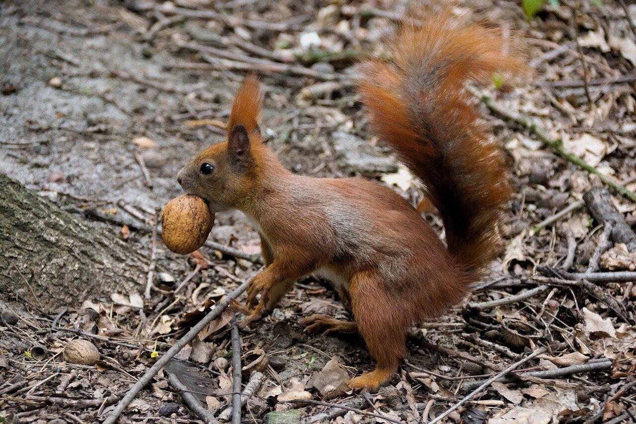 Unsere Wichtel aus Sternenfels mit den Eichhörnchen unterwegs