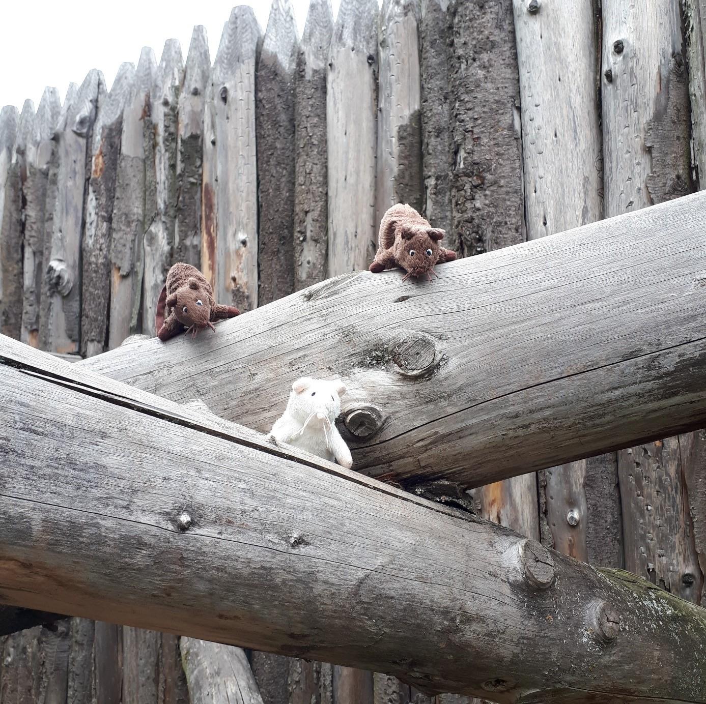 Zwei Stoftiere auf einem Holzbalken vor einer Palisade