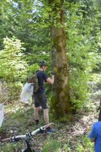 Verblichene Wegmarkierung an einem Baum wird erneuert.